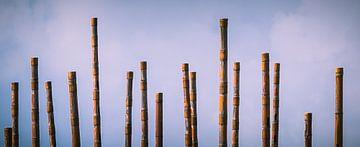 Windorgel op de boulevard van Vlissingen (Zeeland) van Fotografie Jeronimo