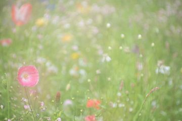 Klaprozen in een bloemenveld van Minie Drost