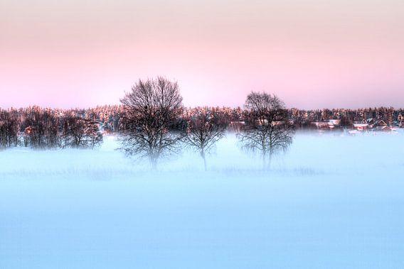Bomen in de mist van Michel Kant