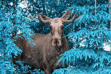 Eland in blauw van mario proeter