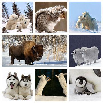 collage dieren in de sneeuw van Marja Hoebe