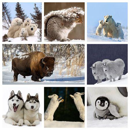 collage dieren in de sneeuw