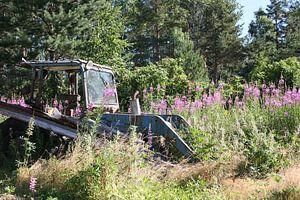 Alter Traktor auf einem Gebiet mit Lupines