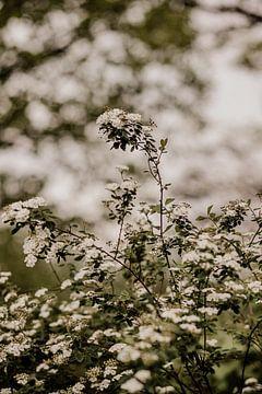 Bloemenstruik van Tessa Dommerholt