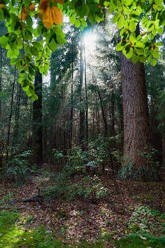 Jakobsleiter Sonnenstrahlen im Wald von Fotografiecor .nl