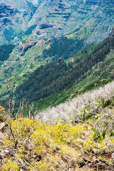 Bergen en bloemen van Michel van Kooten