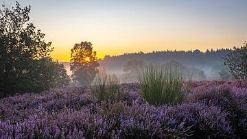Sonnenaufgang auf der Mechelse Heide von Dominiek Cottem