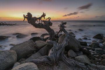 Natuurlijke kunstvorm langs de Noordkust van Aruba van Arthur Puls Photography