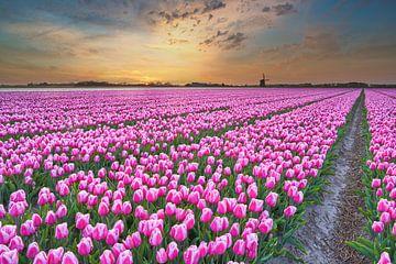 Gekleurde tulpen bij een gekleurde zonsopkomst van eric van der eijk