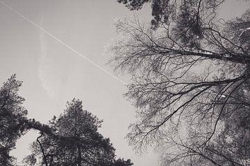 Artistieke bomen von Tamara van Kilsdonk