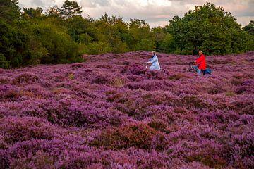 Bloeiende Heide 15 van Peter Heins