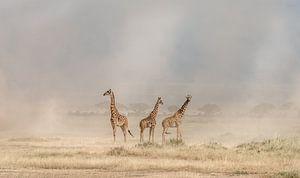 Weathering the Amboseli Dust Devils, Jeffrey C. wastafel