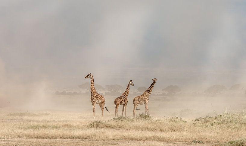 Weathering the Amboseli Dust Devils, Jeffrey C. wastafel van 1x