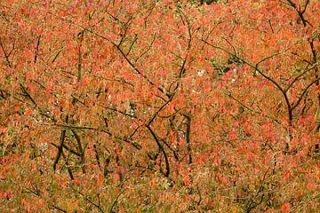 Herfstkleuren van Myrte Wilms