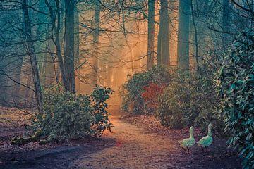Lente in park De Mick van Bruno Hermans