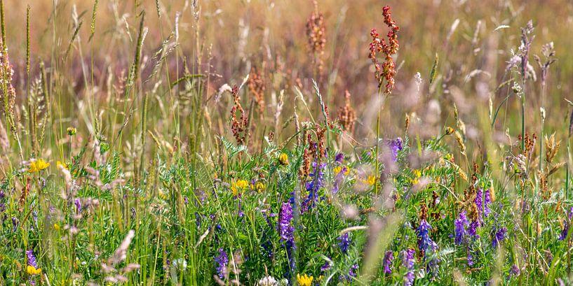 grasland met paars bloeiende wikke van Hanneke Luit