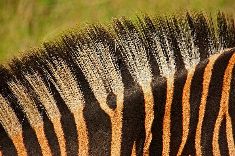 zebra detail van Meleah Fotografie
