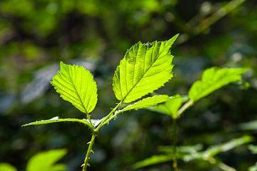 Zonnige bladeren van Nel Diepstraten
