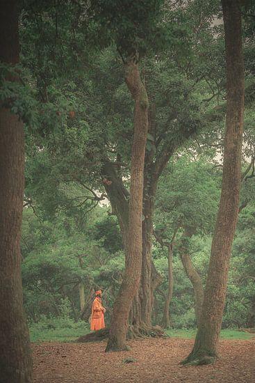 De monnik in de bomen