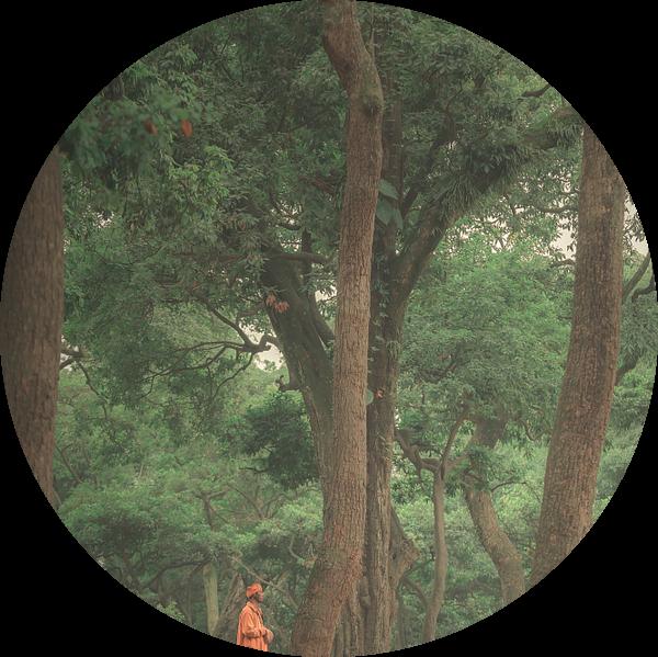 De monnik in de bomen van Edgar Bonnet-behar