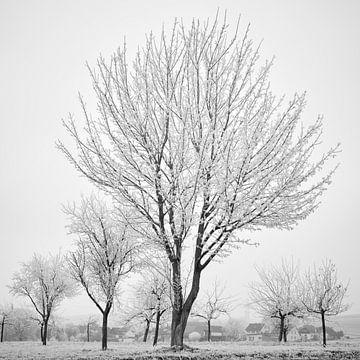 Winter-Ernte 4 von Keith Wilson Photography