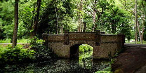 Natuurfoto van een Hollands park met oude bomen, een brug  en slootjes