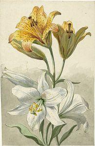 Gele en witte lelies, Willem van Leen