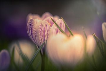 Lente bloem von Eric Andriessen