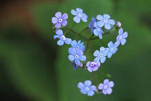 flowers in the garden van