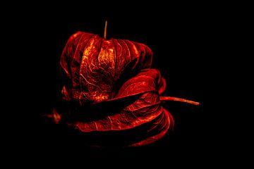 Macro opname van andijvie rood en donker van Dieter Walther