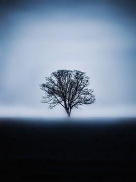 De blauwe boom van Maria Almyra