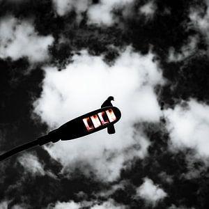 zwart-wit silhouet van een duif van Jan Hermsen