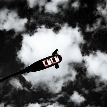 schwarz und weiß Silhouette einer Taube von Jan Hermsen