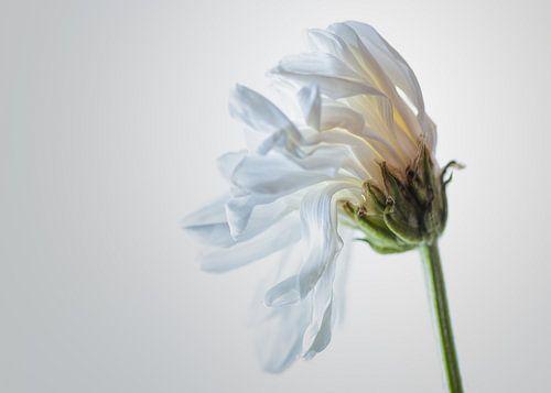 Stervende bloem van Herwin Wielink