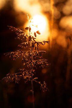 Tegenlicht von Thijs Schouten