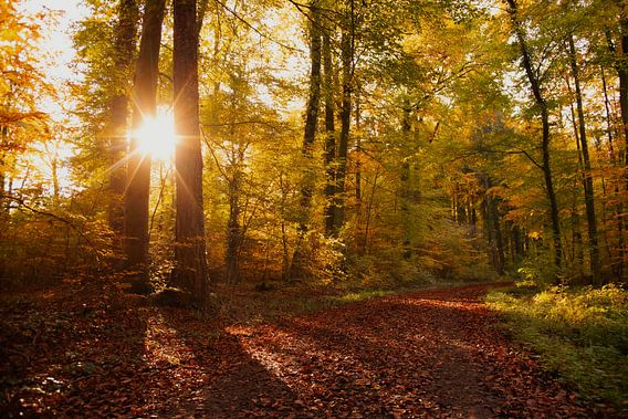 Farben der Erde bunter Herbst