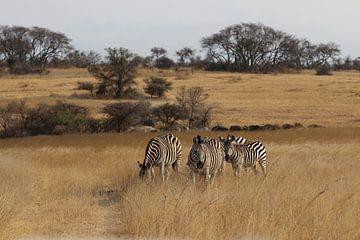 Zebra von Annette van den Berg