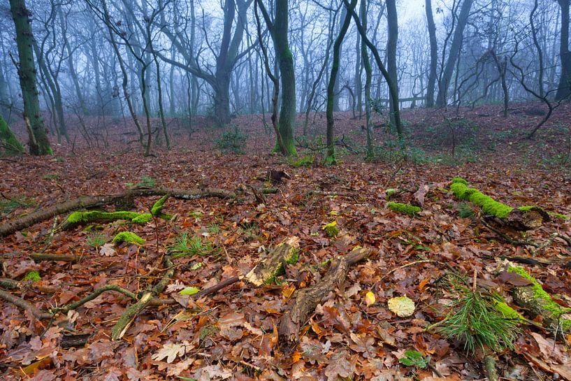 Herfst in het Dr. Hommesbos van Ron Buist