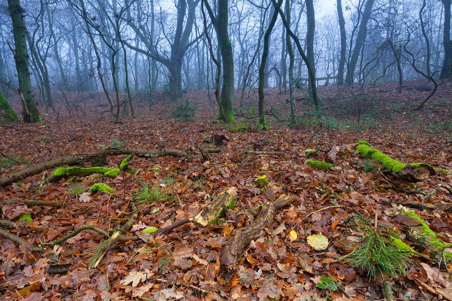 Herfst in het Dr. Hommesbos