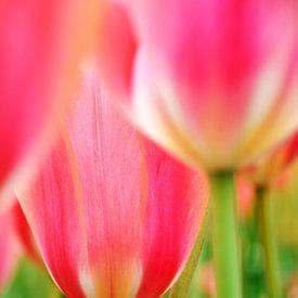 Tulpen van Marjon Grendel