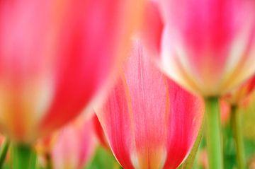 Tulpen von Marjon Grendel
