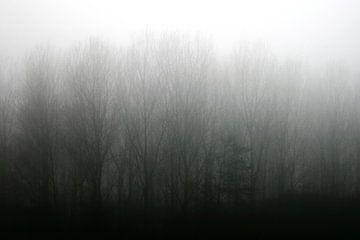 Haze von Inge Berken