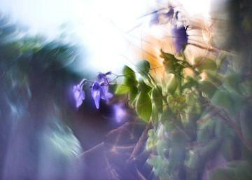 Kreativ mit Blumen (3) von Wim van Berlo