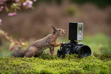 Eichhörnchen macht Foto von Cynthia Verbruggen