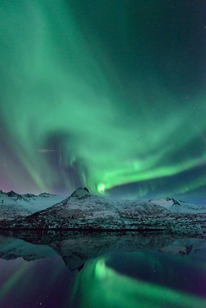 Noorderlicht in de nacht boven de Lofoten in Noord-Noorwegen