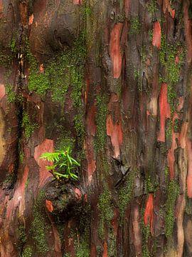 Frisches Grün an der Eibenrinde von Denis Feiner