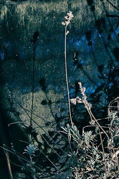 lavendel blauw van Karin vanBijleveltFotografie