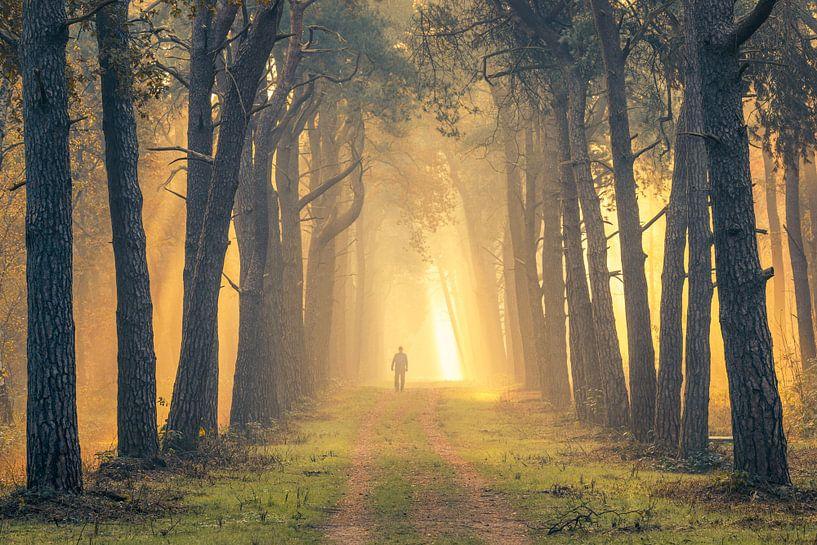 Wandelaar in mistig bos bij zonsopkomst (Utrechtse Heuvelrug, Nederland) van Sjaak den Breeje Landschapsfotografie