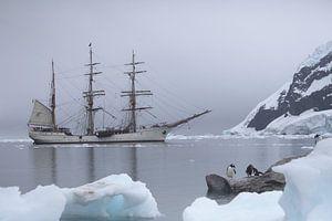 Antarctic white silents van ad vermeulen