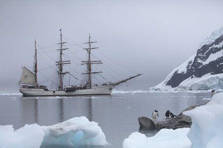 Antarctic white silents